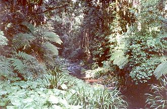 Border Ranges National Park - A diverse set of subtropical rainforest flora is preserved along Brindle Creek.