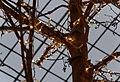 Bristol MMB «Q3 Cabot Circus.jpg