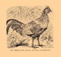 Brockhaus and Efron Encyclopedic Dictionary b33 074-0- 12 - Gatus ferrugineus.png