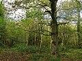 Brocks Wood - geograph.org.uk - 1569455.jpg