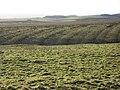 Brocolitia (5) - geograph.org.uk - 1104372.jpg