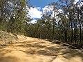 Brooman NSW 2538, Australia - panoramio (130).jpg