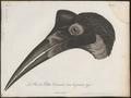 Bucorvus abyssinicus - kop - 1796-1808 - Print - Iconographia Zoologica - Special Collections University of Amsterdam - UBA01 IZ19300147.tif