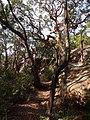 Bullimah Spur - panoramio (3).jpg