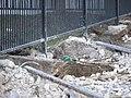 Buried Rails and Ties (4873874735).jpg