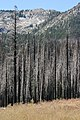 Burned Woods, South Lake Tahoe, CA - panoramio (2).jpg