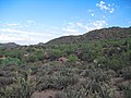 Butcher Jones Off-Trail, Tonto National Forest, Fort McDowell, AZ 85264, USA - panoramio (3).jpg