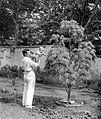 COLLECTIE TROPENMUSEUM Dr. R.A.M. Bergman met baby in de tuin TMnr 10027157.jpg
