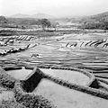 COLLECTIE TROPENMUSEUM Sawahcomplexen aan de bovenloop van de Tjitarum bij Tjikitu TMnr 10011083.jpg