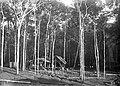 Cabanas de Trabalhadores - 310, Acervo do Museu Paulista da USP (cropped).jpg