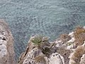 Calamosche (Riserva di Vendicari) - panoramio.jpg
