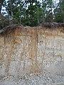 Calvert Cliffs State Park - Lusby, Maryland (14774376206).jpg