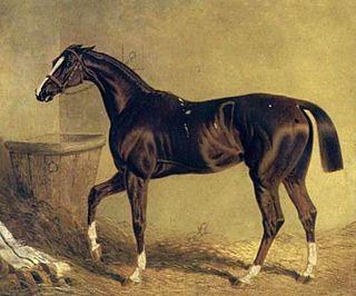 Camarine British-bred Thoroughbred racehorse