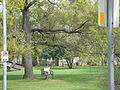 Campus Menil Collection 02.jpg