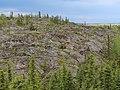 Canadian Shield landscape in Yellowknife NT.jpg