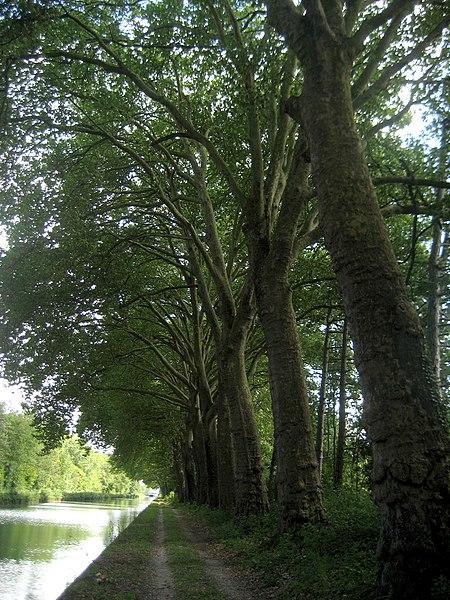 Canal latéral à la Marne,  Aigny, France