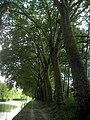 Canal latéral à la Marne, Aigny, France - panoramio.jpg