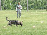 Canine counterpart-MWD 150505-F-IT949-242.jpg