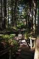 Cape Flattery Boardwalk 2.JPG