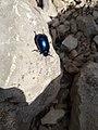 Carabidae, Coleoptera 02.jpg