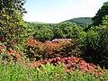 Castle Kennedy Gardens (32528041323).jpg