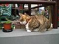 Cat - panoramio (5).jpg