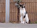 Cat in Kfar Yona.jpg