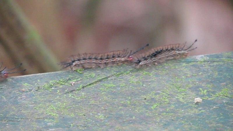 File:Caterpillar Parade (6860170285).jpg