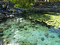 Cenote Xlacah - P1110790.JPG
