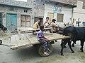 Chak 72 GB, Pakistan - panoramio (4).jpg