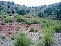 Chapri Wazir Rd 4 - panoramio.jpg