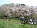 Cherry blossoms akayu 2005-04.JPG