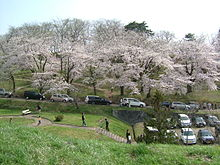 Cherry blossoms akayu 2005-04.JPG