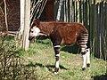 Chester Zoo (8883728790).jpg