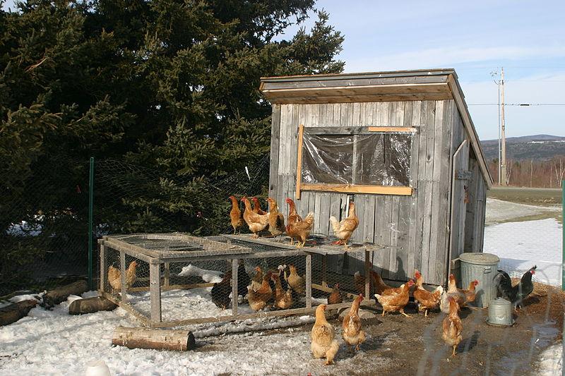 File:Chicken coop in winter.jpg