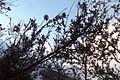 Chitral Green in spring.JPG