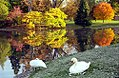 "Cincinnati - Spring Grove Cemetery & Arboretum ""Swans & Autumn Reflection"" (4036551073).jpg"