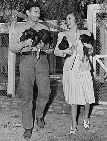 A happy couple laughing and walking on their ranch as both carry two chickens in their arms.