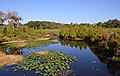 Clearwater,Florida,USA. - panoramio (125).jpg