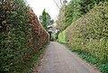 Clenches Farm Lane (2) - geograph.org.uk - 1255882.jpg