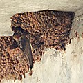 Cliff Swallow (4868469029).jpg