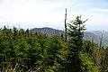 Clingmans-dome-spruce-fir-tn3.jpg
