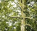 Cloud Bay Tree, Cloud Bay (14928045226).jpg