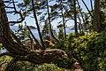 Coastal Trail, East Sooke Regional Park, British Columbia, Canada 26.jpg