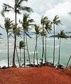 Coconut Tree Hill Beauty.jpg