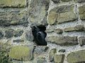 Coloeus monedula -Conwy Castle, Clwyd, Wales-8 (2).jpg