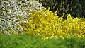 Coloured spring 2008 - Cluj-Napoca (2407487721).jpg