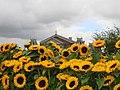 Concertgebouw, Amsterdam van af het Van Gogh Museum.jpg
