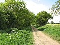 Cow parsley on the Marriotts Way - geograph.org.uk - 1293338.jpg
