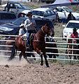 Cowboy & his horse.jpg